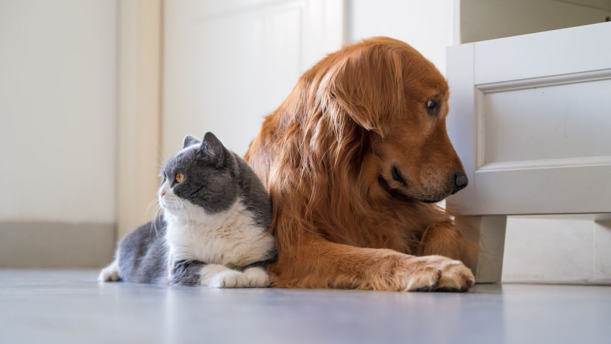 How to Handle Your Pets Allergies