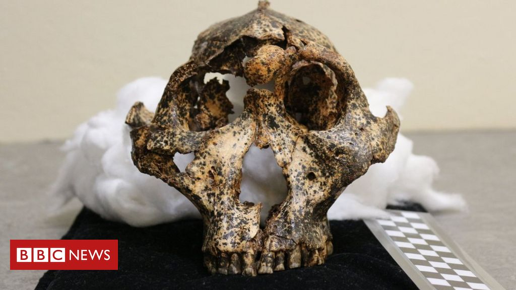 Two-million-year-old skull of human cousin unearthed
