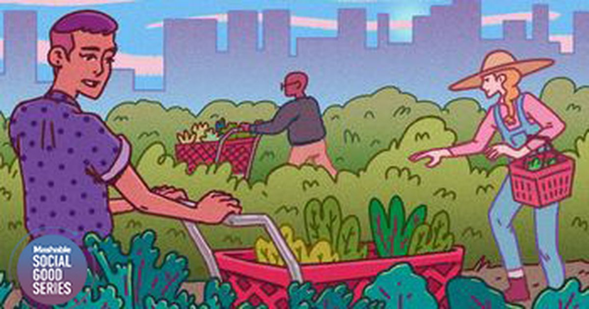 A beginners guide to urban foraging