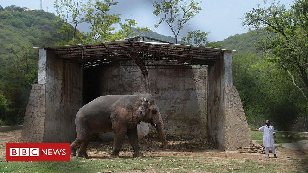 Kaavan, the worlds loneliest elephant, is finally going free