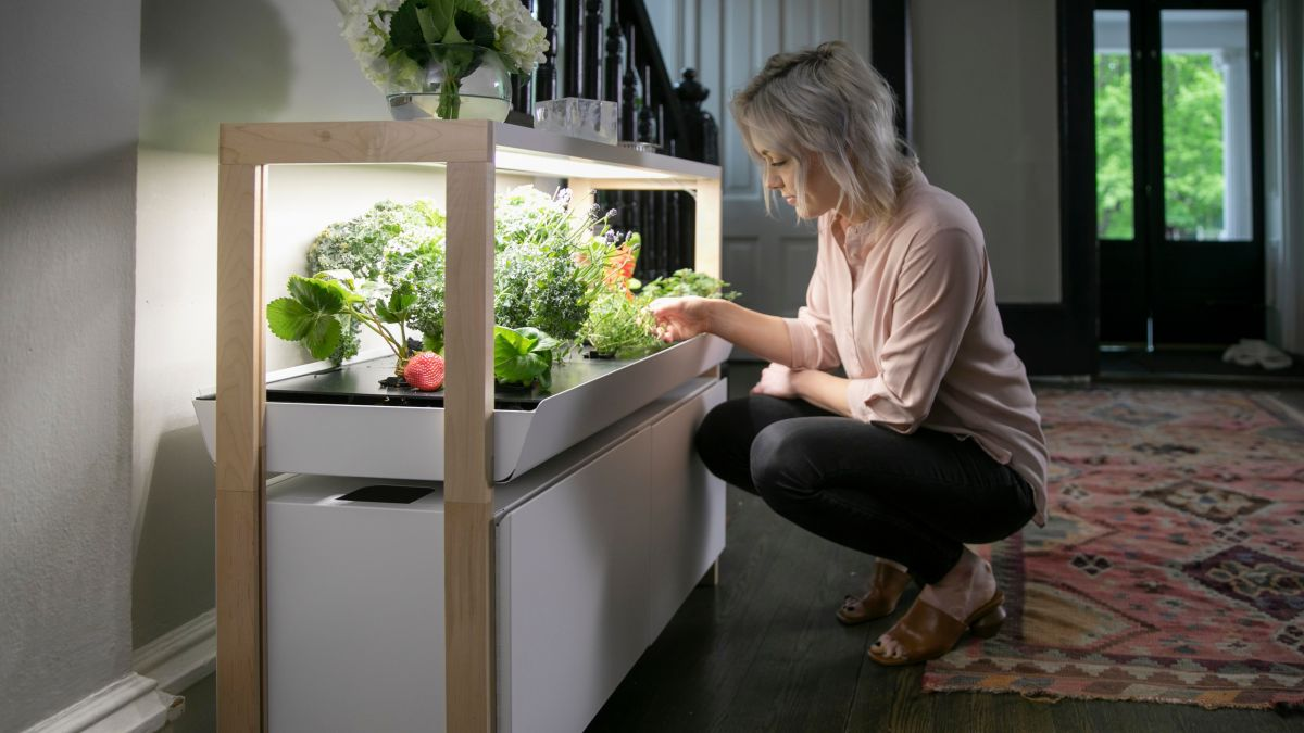 This Kitchen Garden System Adds Microgreens (and Alexa) To Your Lockdown Diet