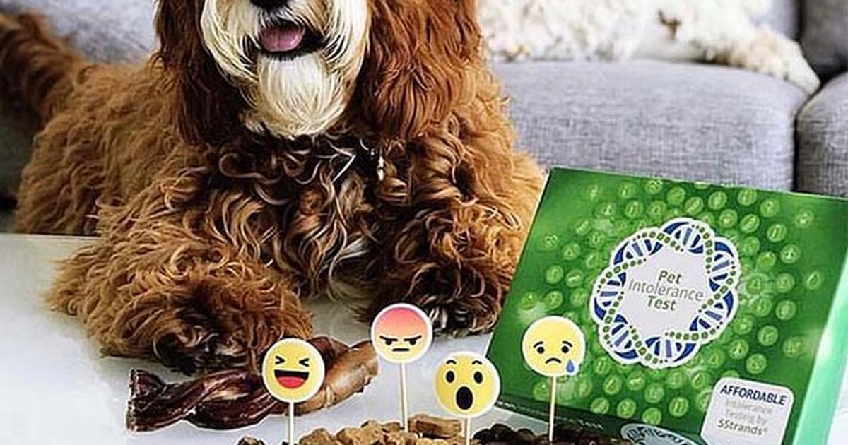 How to get insight into your pets food and environmental intolerances